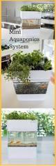 best 25 small indoor plants ideas on pinterest apartment