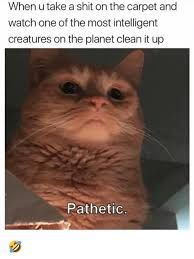 Carpet Cleaning Meme - 25 best memes about carpet carpet memes
