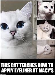 White Cat Meme - white cat imgflip