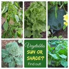 shade tolerant vegetables vs sun friendly veggies sunlight