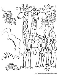 herd of giraffes coloring sheet create a printout or activity