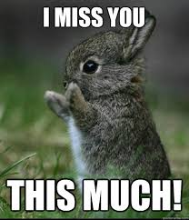 Funny I Miss You Meme - i miss you this much dis much bunny quickmeme