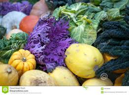 winter vegetables late autumn in a vegetable garden uk stock photo