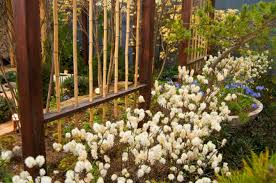bamboo fence panels perth interesting bamboo fencing for your