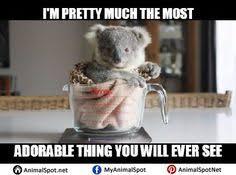 wet koala memes different types of funny animal memes