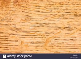 quarter sawn white oak wood grain background stock photo royalty