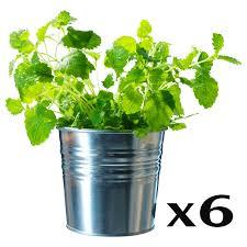 amazon com ikea socker galvanized steel flower plant pot set of