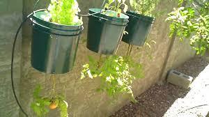 growing a backyard vegetable garden in phoenix arizona youtube
