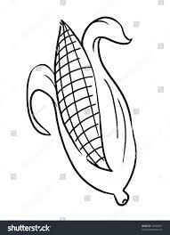 outline corn illustration outline ear corn stock illustration