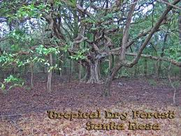 Tropical Dry Forest Animals And Plants - tropical seasonal forest
