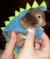 Hamster Halloween Costumes Loved Child Halloween Costumes Pet Versions