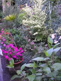immagini di giardini fioriti sito istituzionale comune di dolianova provincia di cagliari