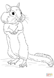 chipmunk coloring page free printable coloring pages