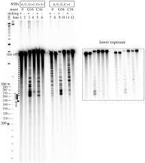 effect of a nick in the non template strand on transcription