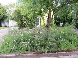 portland native plant list pacific northwest urban meadowscaping west multnomah soil
