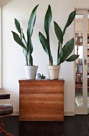best indoor house plant extremely architectural house plants the best indoor and how to