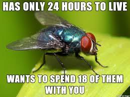Fly Meme - misunderstood fly meme guy