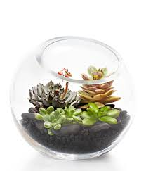 large succulent terrarium at from you flowers