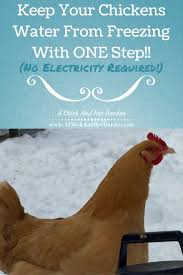 Backyard Chicken Blogs by 2962 Best Homestead Livestock Images On Pinterest Raising