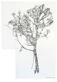 tree drawings erika osborne