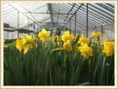 Hartstone Flowers Weymouth Ma - about hartstone flower inc weymouth ma florist