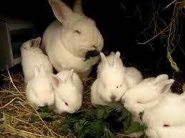 my rabbits eat stinging nettles youtube