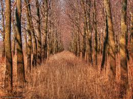 wallpaper endless pathway trees perspective free