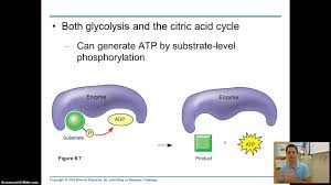 campbell ap bio chapter 9 part 1 youtube