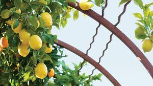 fruit edibles best fruits vegetables to grow sunset