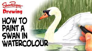 how to paint a swan in watercolour youtube