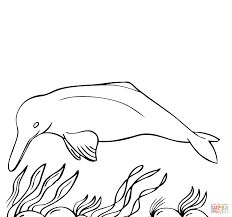amazon river dolphin coloring page free printable coloring pages