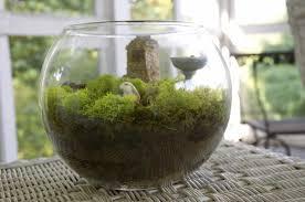 secret garden wednesday garden in a jar