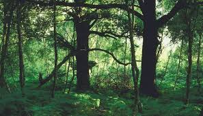 facts about cedar trees sciencing