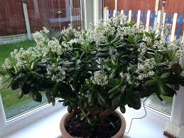 floor plants home decor plants inside home decorating with indoor plants plants home