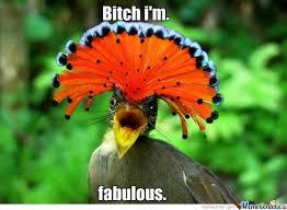 I Am Fabulous Meme - bitch i am fabulous funny bird meme image