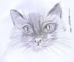 imagenes a lapiz de gatos gato a lapiz ilustra