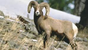 Wyoming wild animals images Wildlife viewing travel wyoming that 39 s wy jpg