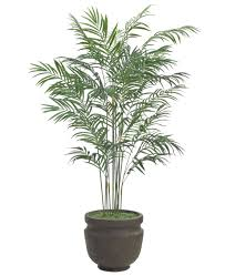 palm t63 6 areca palm shown in container option a potter u0027s jar