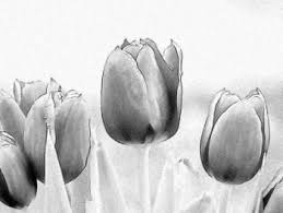 the 25 best pencil drawings of flowers ideas on pinterest