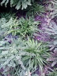 native plant species diverse landscapes for shaded areas using ferns and sedges with