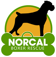 boxer dog adoption los angeles norcal boxer rescue u2013 leave no boxer behind