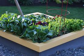 square foot gardening flowers planting a square foot salad garden video
