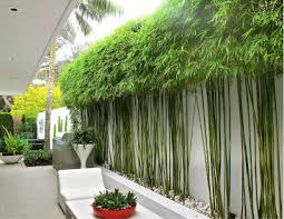 modern clean bamboo landscape design search plant