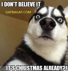 Christmas Dog Meme - funny meme about christmas ft funny dog gap ba gap