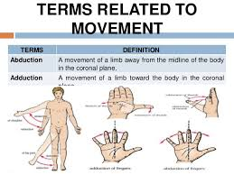 Human Anatomy Planes Of The Body Introduction To General Anatomy I