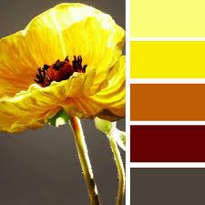 Warm Orange Color 33 Orange Color Schemes Inspiring Ideas For Modern Interior