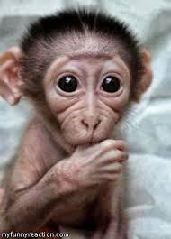 Baby Monkey Meme - shocking baby monkey reaction fb comment image
