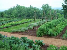 mysecretgarden colonial gardens part 4 2 monticello vegetable garden