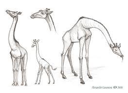 alexander casanova generic giraffe sketches