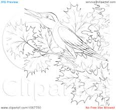 incredible printable tree coloring pages about newest article